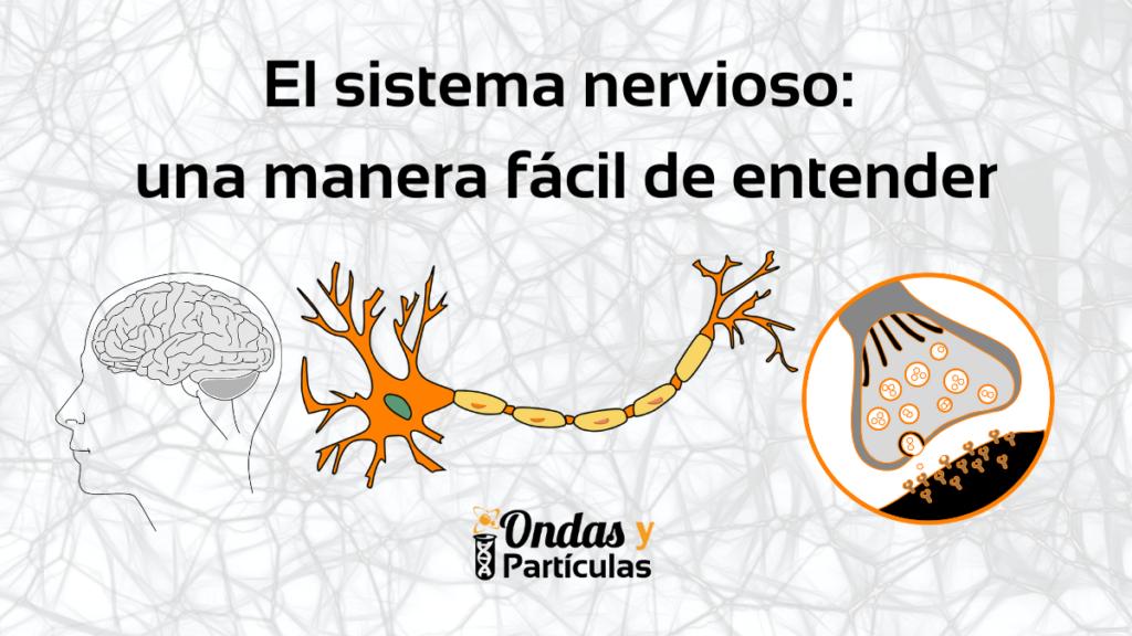 El-sistema-nervioso-una-manera-facil-de-entender