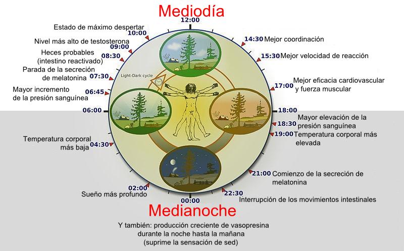El ritmo circadiano se ve afectado por el jet lag. Fisiopatología ritmo circadianos.