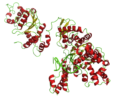 Estructura tridimensional de la Taq polimerasa.