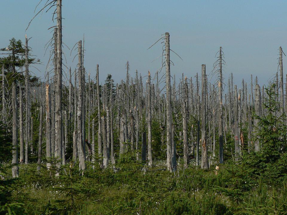 Bosque afectado por la lluvia ácida.