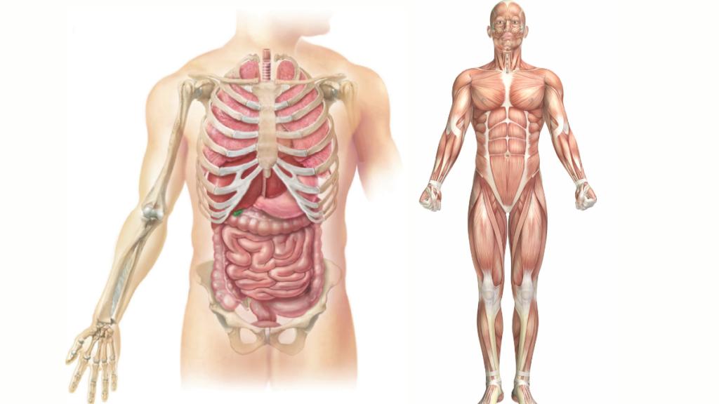 Los tres métodos principales del estudio de la anatomia