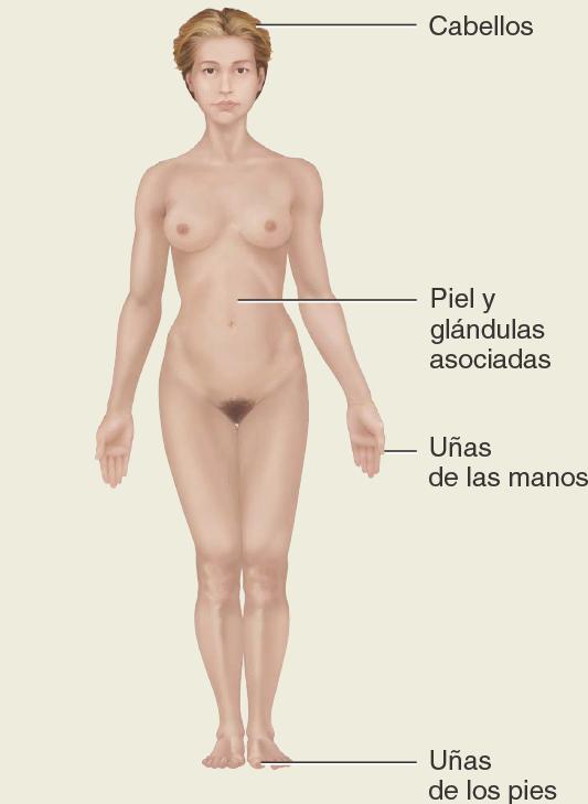 Sistema-tegumetario. Métodos de estudio de la anatomia