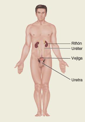 Sistema-respiratorio. Anatomía sistemática