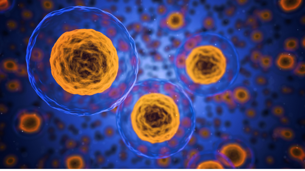El-limite-de-Hayflick-replicacion-celular